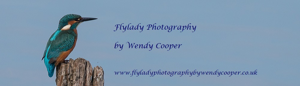 Flylady Photography by Wendy Cooper